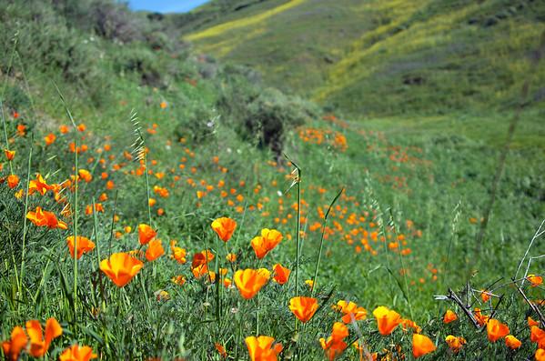 Cambria, California  Spring Countryside