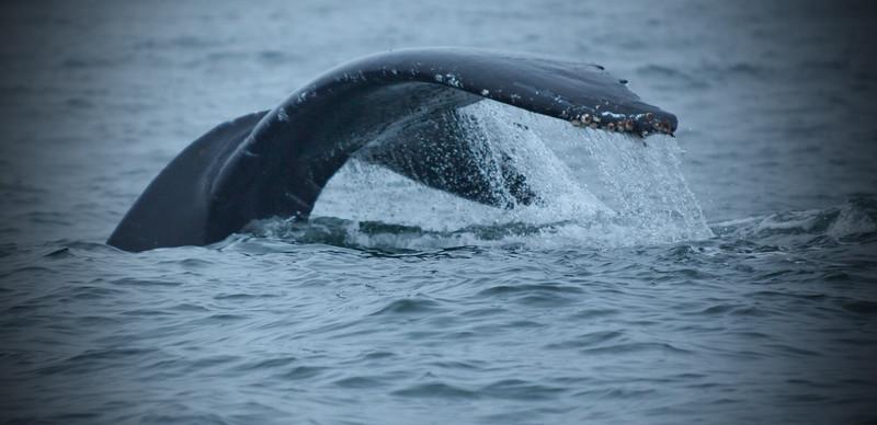 Morro Bay Whale Watching
